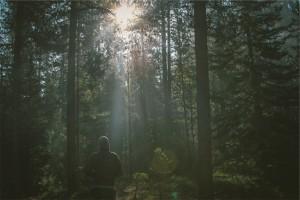 forest-jogger-jogging-4171.jpeg